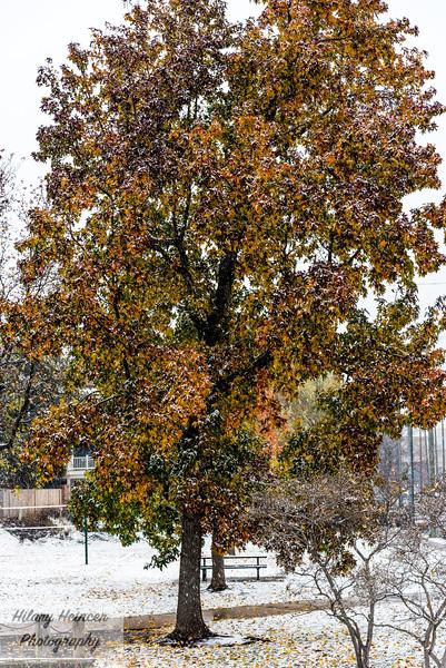 Snowy old town-45.jpg