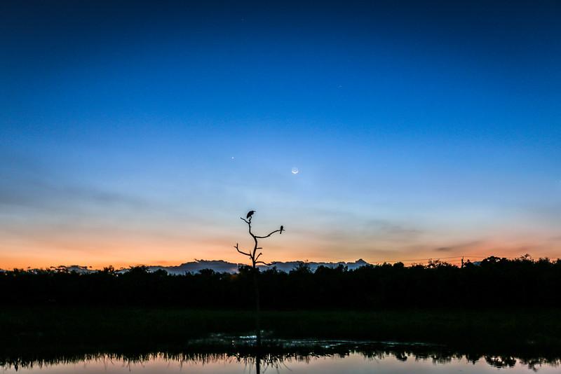 the snag and moon and venus.jpg
