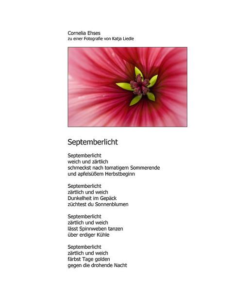 Septemberlicht-Cornelia-Ehses.jpg