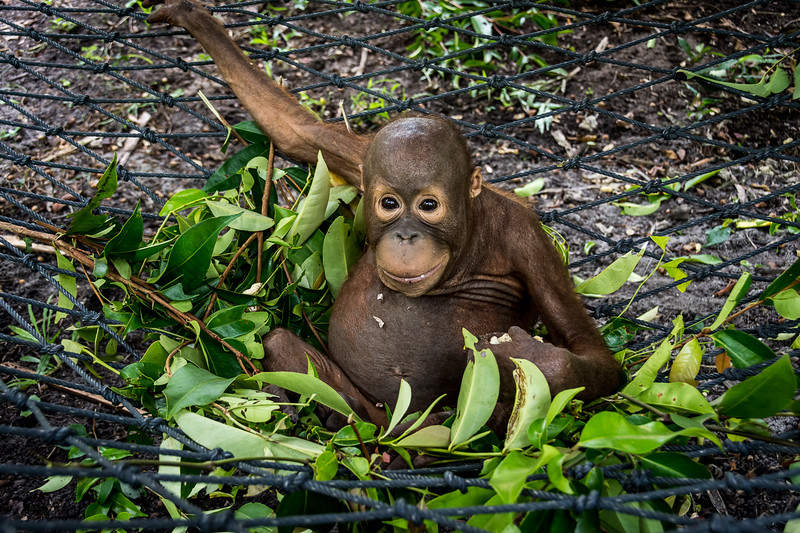 Borneo-2255.jpg