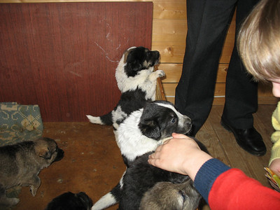 2009-04-19, Taking puppies from Romanovo