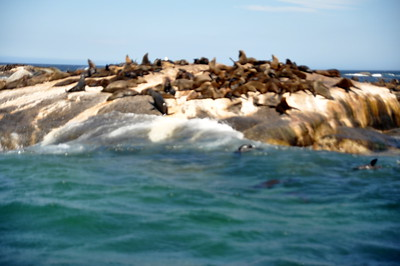 12 Apostles   Hout Bay   Boat Excursion   Seal Colony   Street Performers