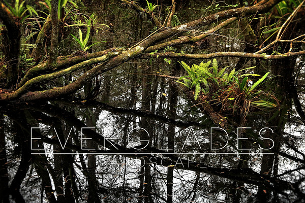 Everglades: Landscape