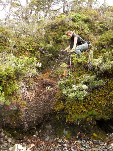 Cabo Froward Hike 201201 (131).jpg