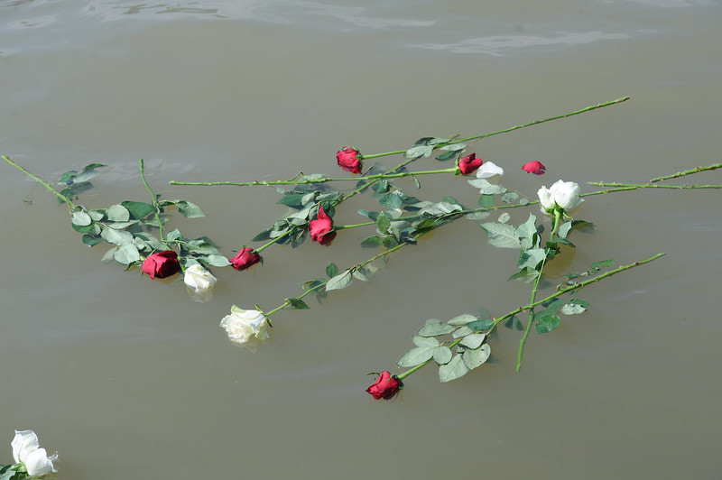 . Flowers float on the Danube river during a march of Hungarian and foreign university students and their teachers from different countries in Budapest, nearby the parliament building on April 8, 2013 to commemorate the victims of the Holocaust, the genocide that resulted in the annihilation of 6 million Jews and 2 million gypsies (Roma and Sinti) by the Nazi regime and its collaborators.  AFP PHOTO / ATTILA KISBENEDEK