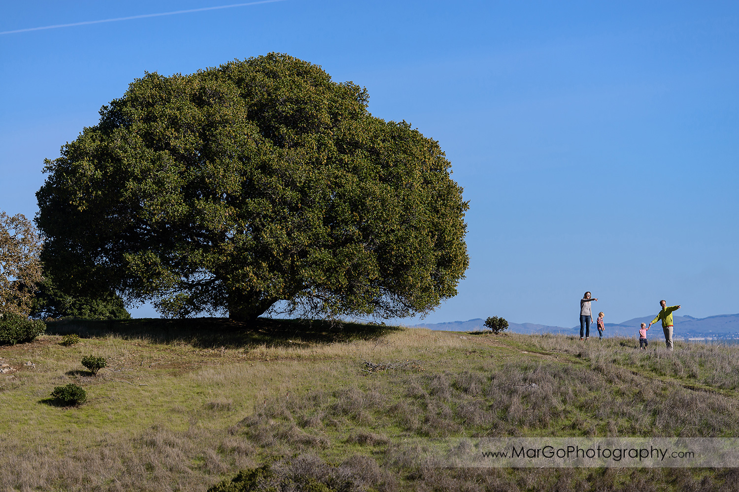 family of four on the top of the hill next to big tree at San Raeael China Camp SP