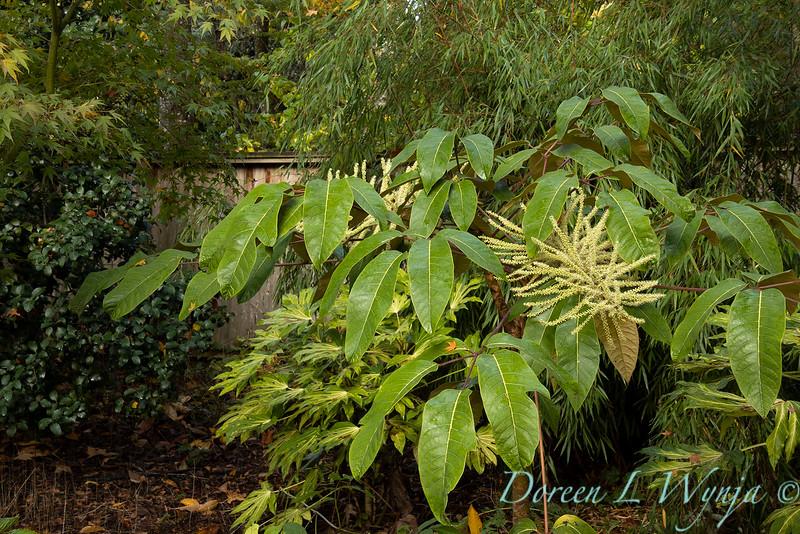 Dietrick fall garden_2095.jpg