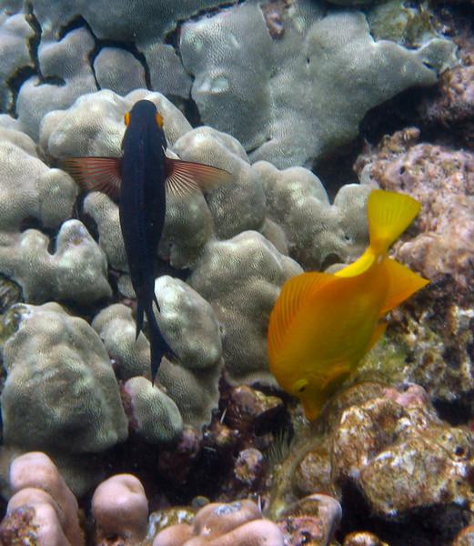 471- 20080416- Hawaii 20-Snorkelling IMG_0672.jpg