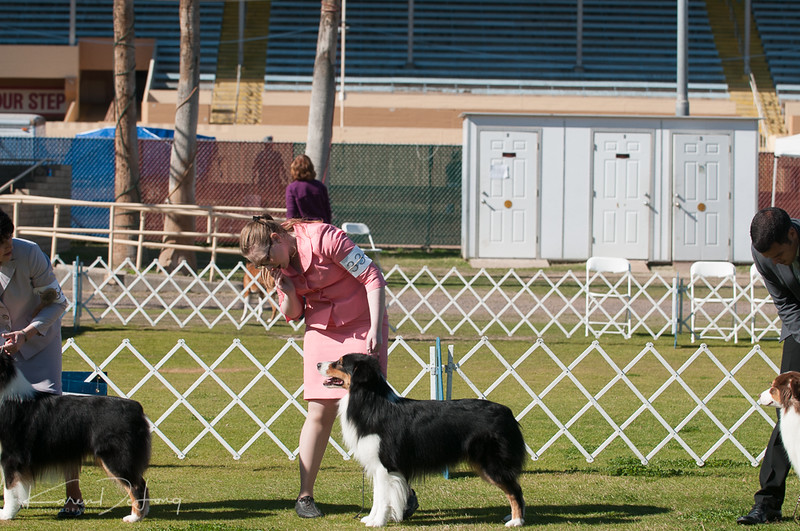 20170205_Australian Shepherds_Lost Dutchman Kennel Club-75.jpg