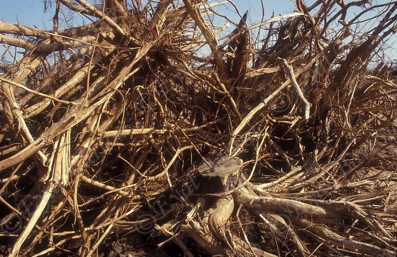 כריתת יערות 1.jpg