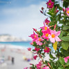 20140918_NICE_FRANCE (4 of 12)