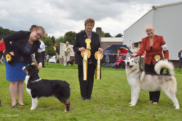 Alfreton and District Canine Society