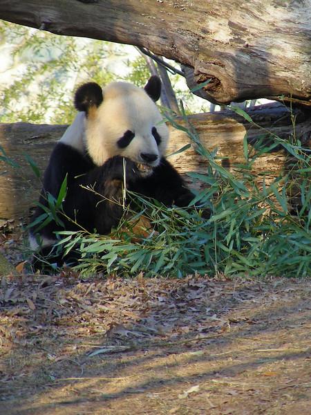 Bamboo breakfast