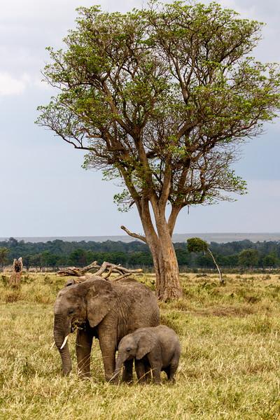 Kenya 2015-07064.jpg