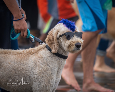 Dog Surfing Championship 2018 - Linda Del Mar Beach, CA