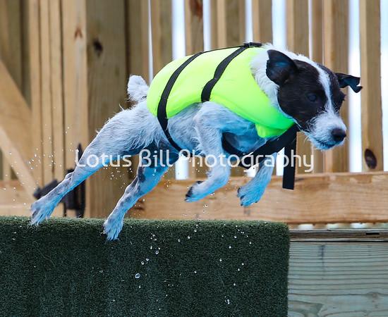 Parson Russell Terrier DSR