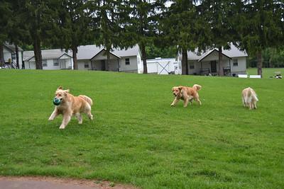 Sophie, Halo & Stella