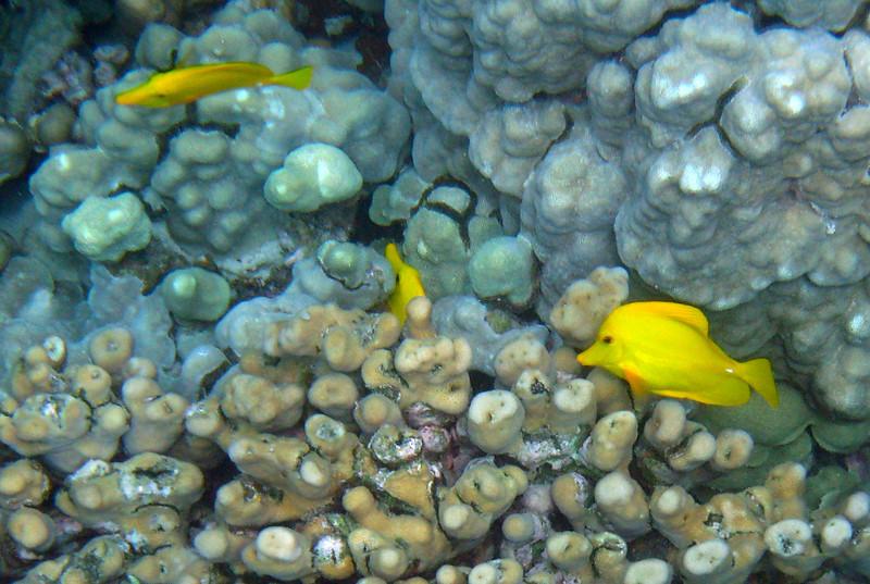 428- 20080416- Hawaii 20-Snorkelling IMG_0588.jpg