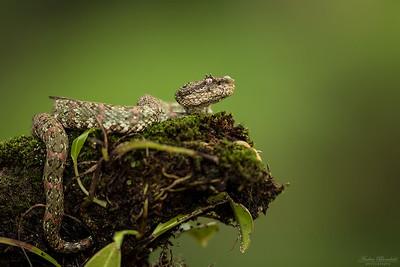 Frogs & Reptiles / Grod- och kräldjur