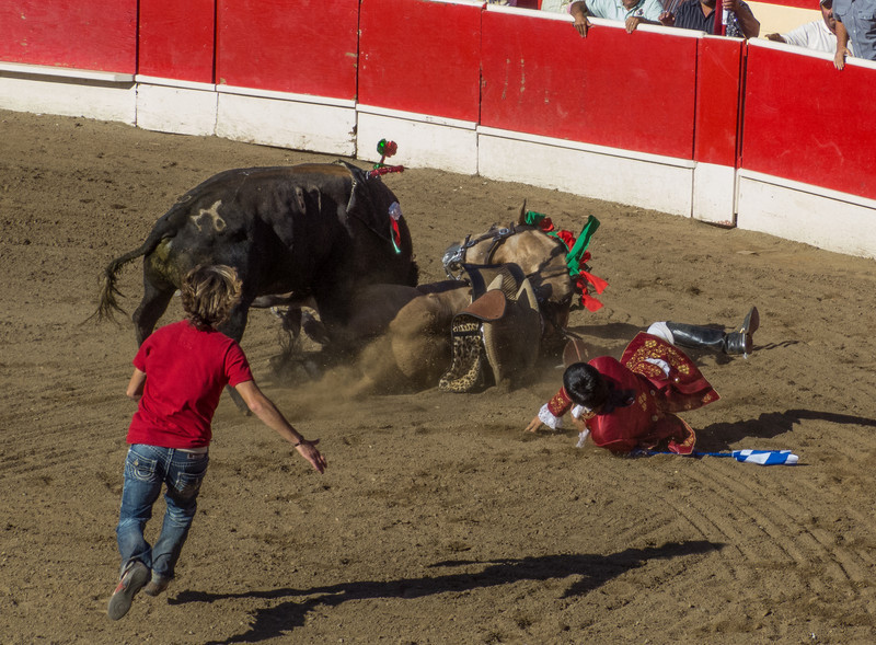 The tricky bull has caught and downed the the horse and Caveleiro, a very unusual circumstance. Horse and rider were uninjured, which is miraculous considering the power of the bull.