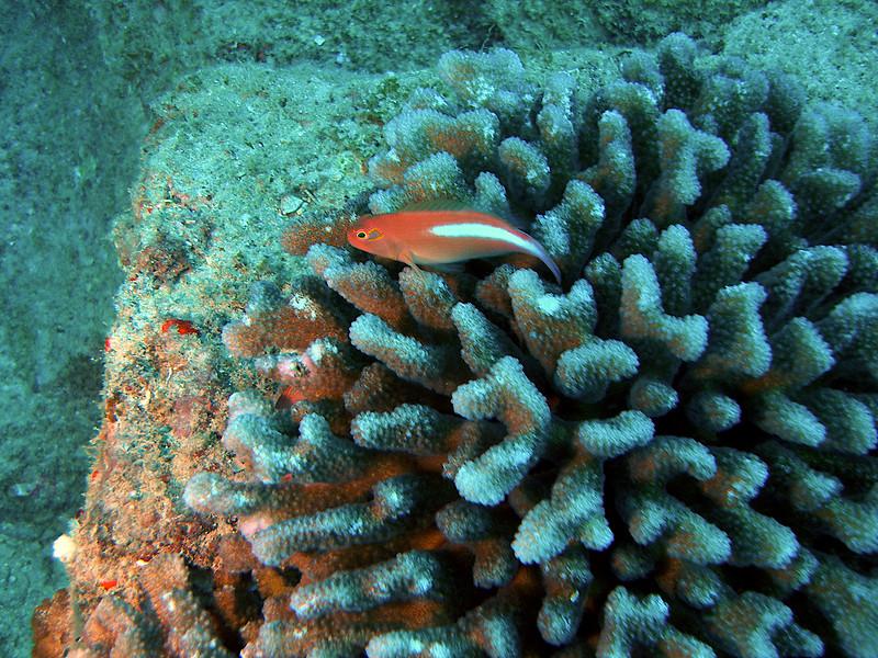 P5083602 - 2010-05-08 at 12-11-13.jpg