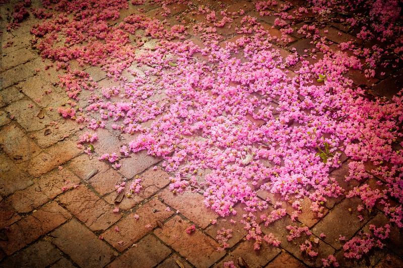 Crepe Mytrle blossoms.jpg
