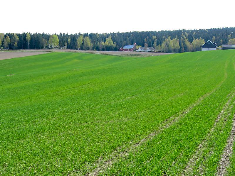Ugjevn nitrogengjødsling