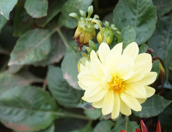 Nova Scotia flowers
