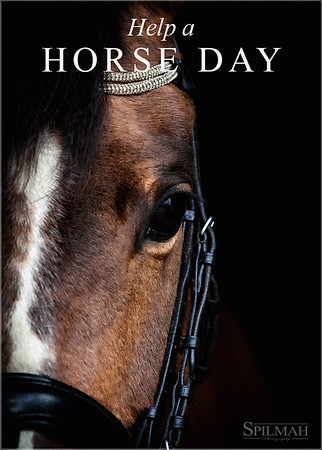 Help A Horse Day