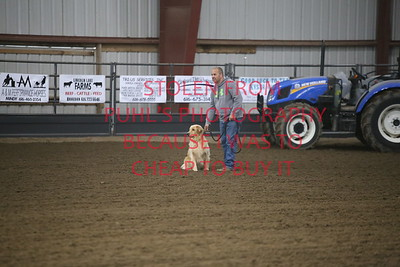 sat dog race