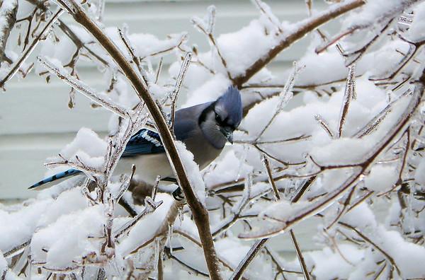 Ice and Birds 2009