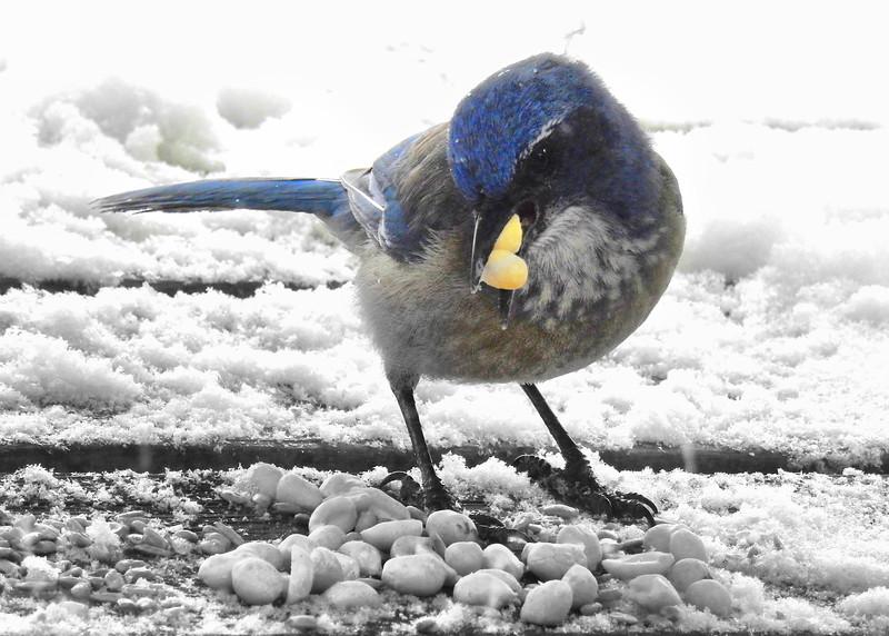 birds (230).jpg
