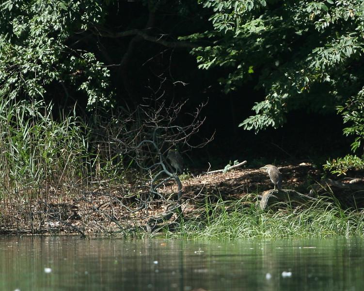 Kayaking in Mattituck Creek.