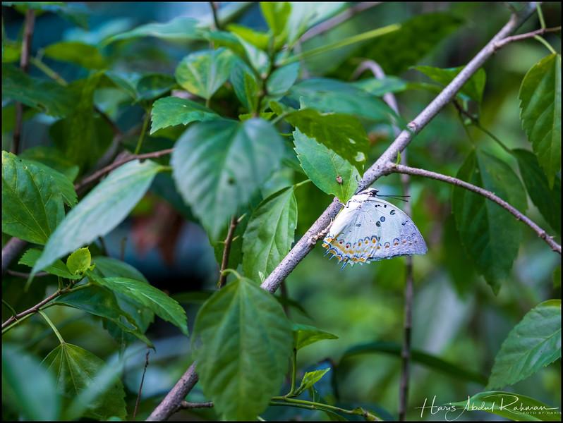 200104 KL Butterfly Park 19.jpg