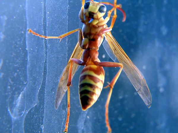 2006 - Wasps