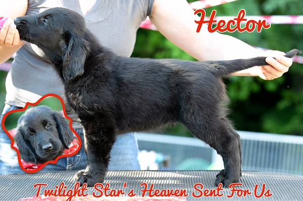 """Twilight Star's Heaven Sent For Us """"Hector"""""""