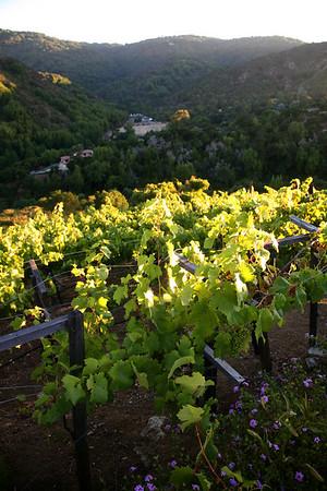 Wolken vineyard
