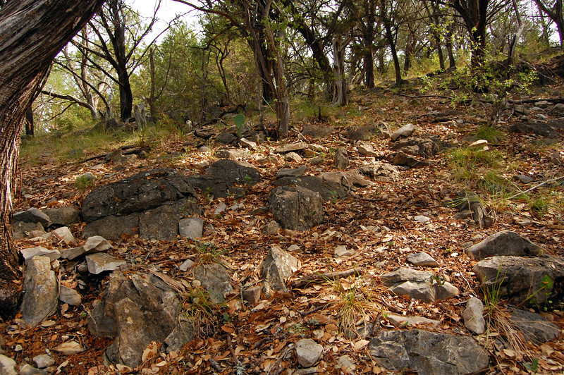 Trees, grass, rocks and cactus