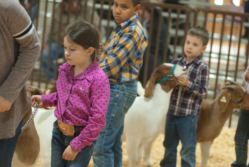 kay_county_showdown_goats_20191207-178.jpg