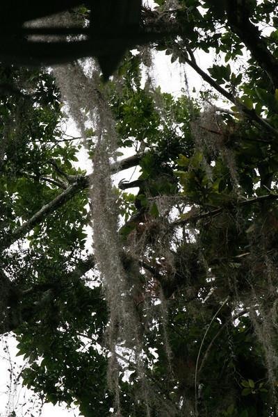 Guatemala Tikal 0 096.JPG