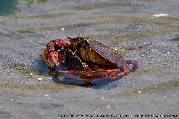 060530 Low Tide at the Beach - Offleash Area Edmonds