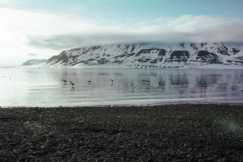 Svalbard-2013-17.jpg