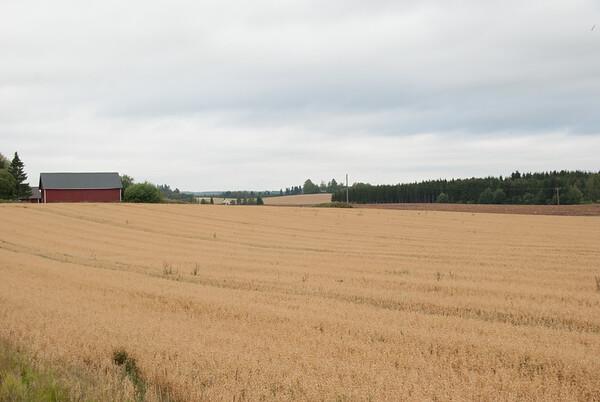 Hafer in Finnland
