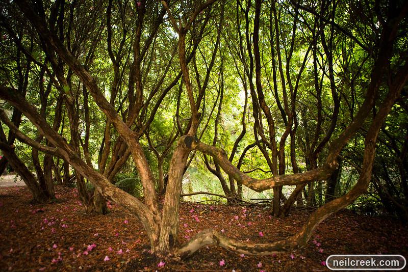 creek-121102-168.jpg