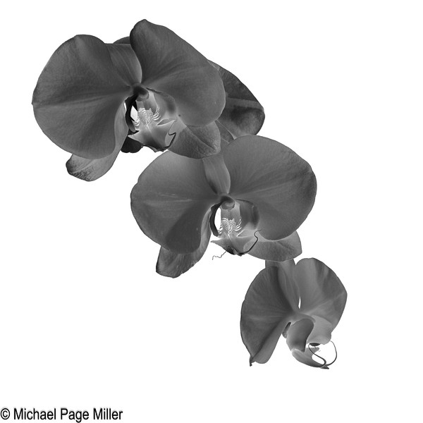 Orchid B 18-02-09-2-3.jpg