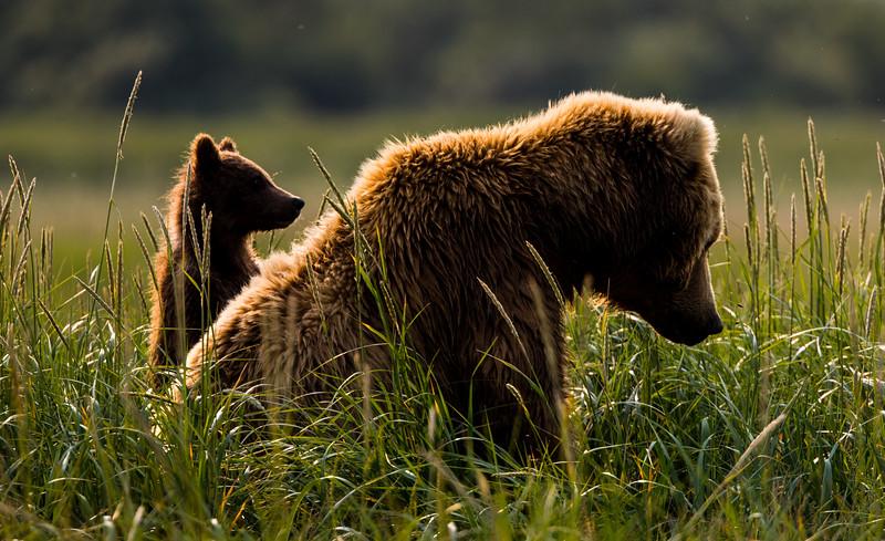 alaska-bears-10-4.jpg