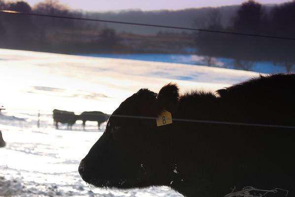 Winter Cattle Creek Farms 2015