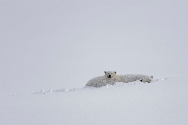 Arctic Wildlife Winter 2016