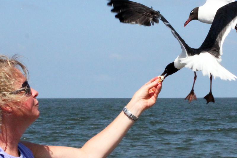 IMG_0247 Jeanne feeding seagull.jpg