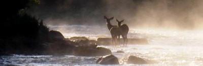 Moose & friends